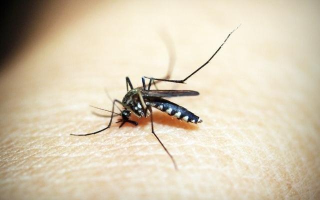 Putukahammustused - ennetamise ja leevendamise ABC