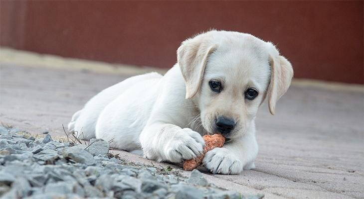 Millal vajab koer täiendavalt vitamiine või mineraalaineid?