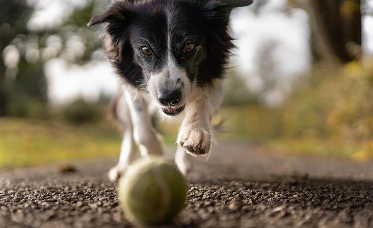 Kuidas lemmiklooma tervist hoida?