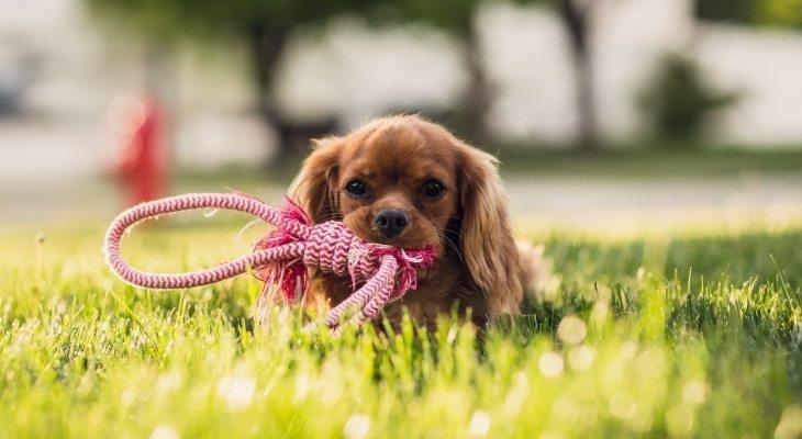 Kuidas koerale või kassile paigaldada puugi- ja kirburihma?