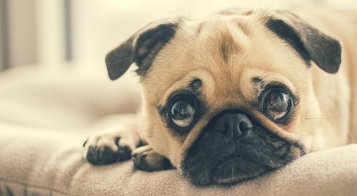 Miks ja kuidas anda koerale või kassile ussirohtu?